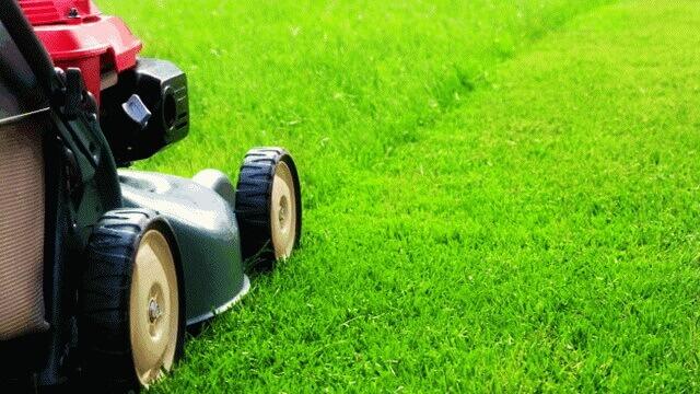 Lawn-Care-Services-danshaplandscape-640